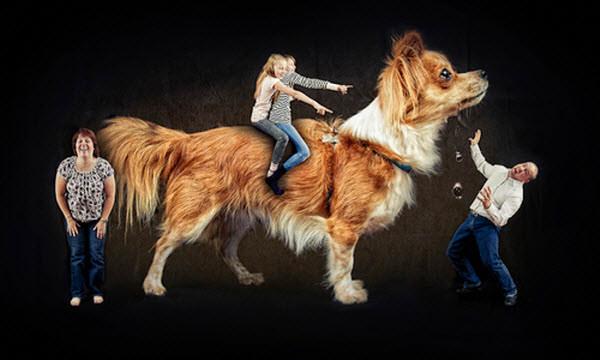семейная собака