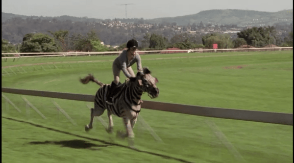 Friday Flicks: 'Racing Stripes' | HORSE NATION