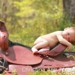 23 Newborn Babies On Saddles Horse Nation