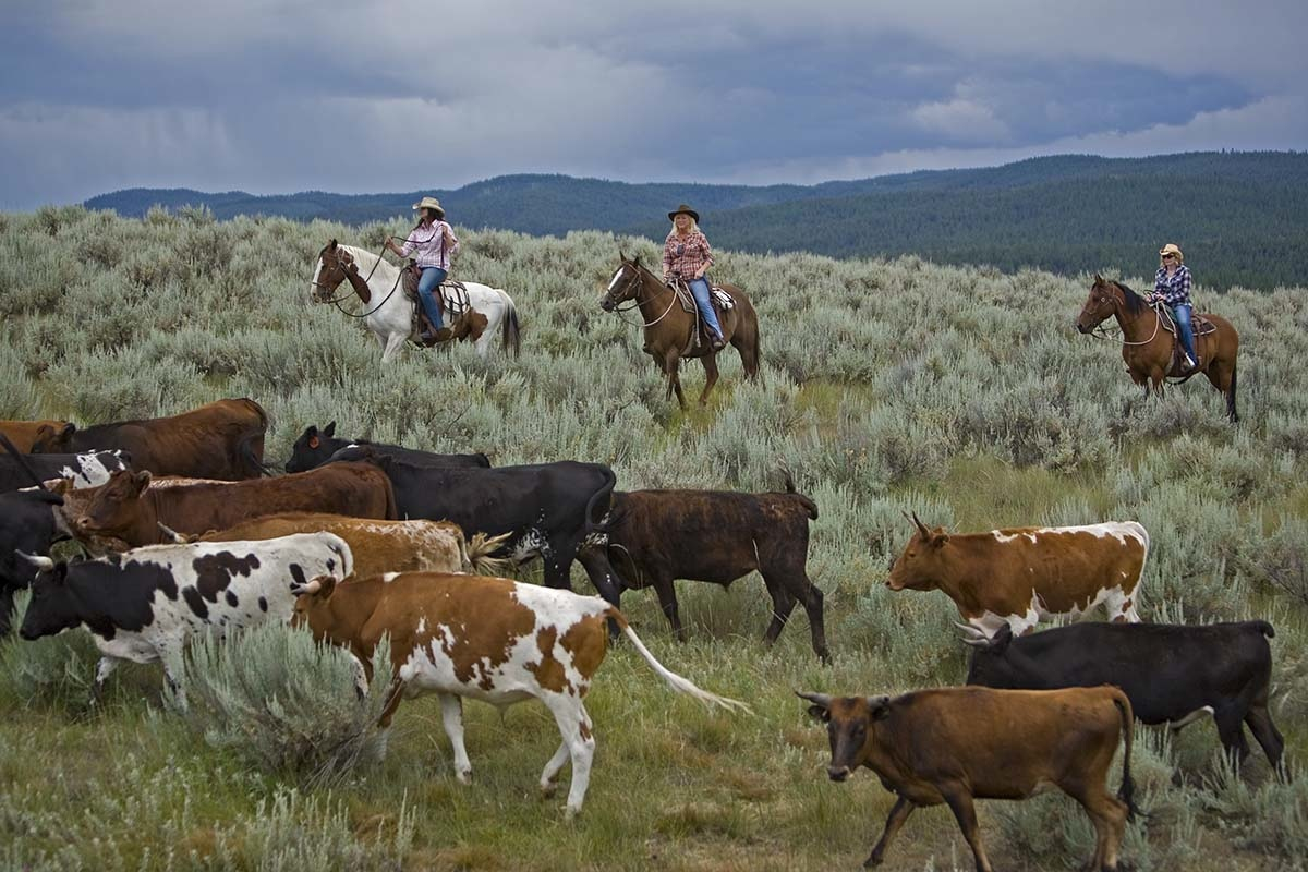 Wide Open Spaces The Annual Cowgirl Spring Roundup