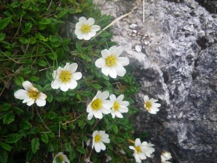 0624 14 Borralie wild flower