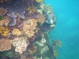 Wavelength 11 fish