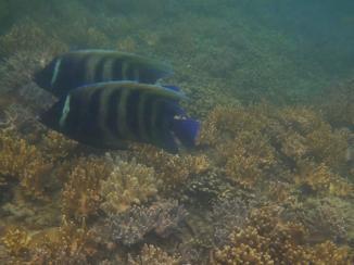 Low Island 10 fish