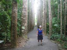 Bingil Bay 8 Kauri Avenue