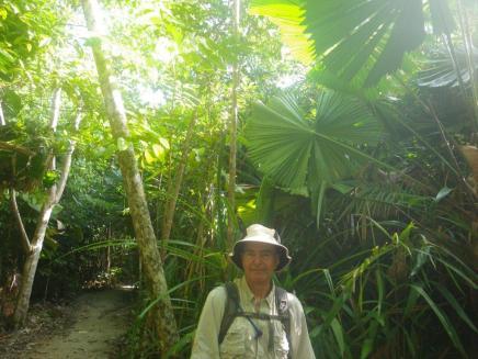 Cassowary Coast 1 Fan Palm