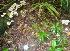 Kuranda 8 Fungi