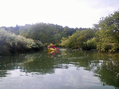 Whananaki Inlet 1