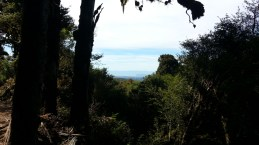 10-timber-trail-lake-taupo-in-distance