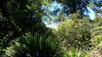 19-sash-and-door-ruapehu-behind-trees