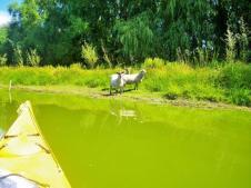 Lake Tutira 3