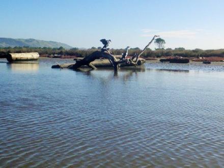 Kopuawhara Stream 1