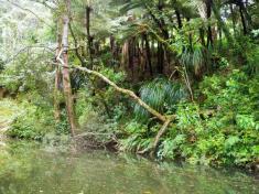 09-Horahora-River