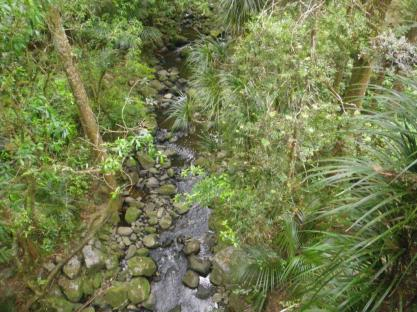 10-A-H-Reed-Kauri-Reserve