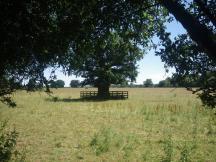 Salcey-Lawn-2