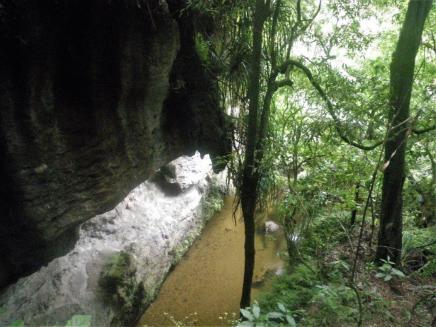 01-Mangapohue-Natural-Bridge