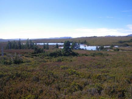 08-Pine-Forest-Moor