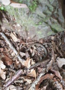 KK day 8 little snake