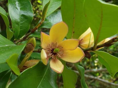 KK day 8 Fragrant flower