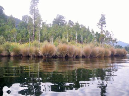 Lake Kaniere 3