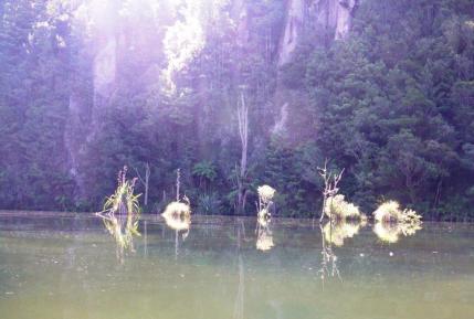 Mangakino Creek reflections