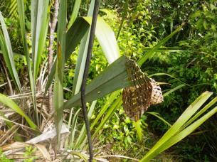 Mt Auckland 5 flax art