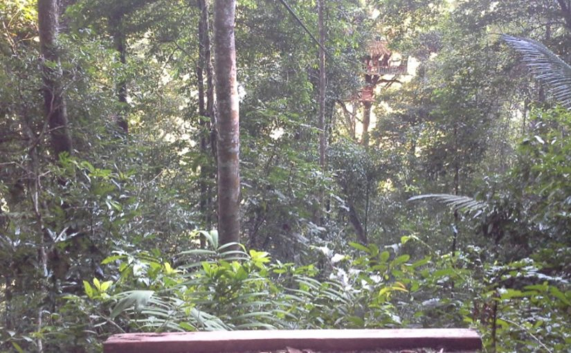 Zip Line to Gibbon Experience