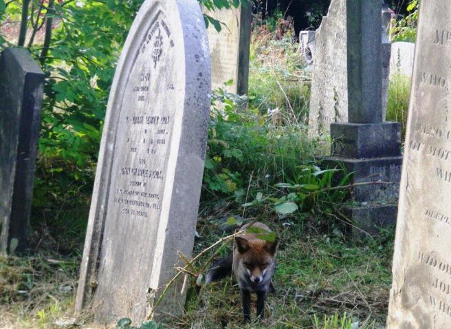 wpid-Brompton-cemetery-Fox.jpg