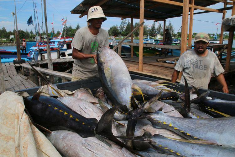 Nelayan merapikan ikan tuna sirip kuning dari kapal ke mobil di Pelabuhan Nelayan Ulee Lheue, Kecamatan Meuraxa, Kota Banda Aceh, Kamis (8/1/2015), sebelum dikirim ke pabrik pengolahan di Medan.  Dari Medan, hasil laut Aceh dijual ke luar negeri, antara lain ke Thailand, Korea Selatan, dan Jepang.