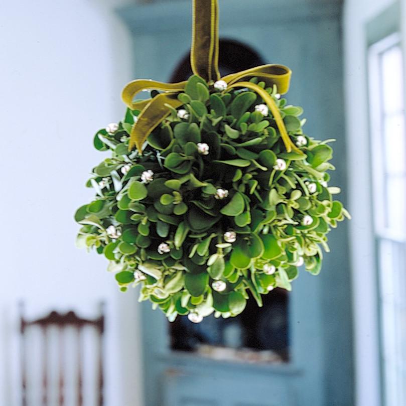 Mistletoe Kissing Ball Martha Stewart