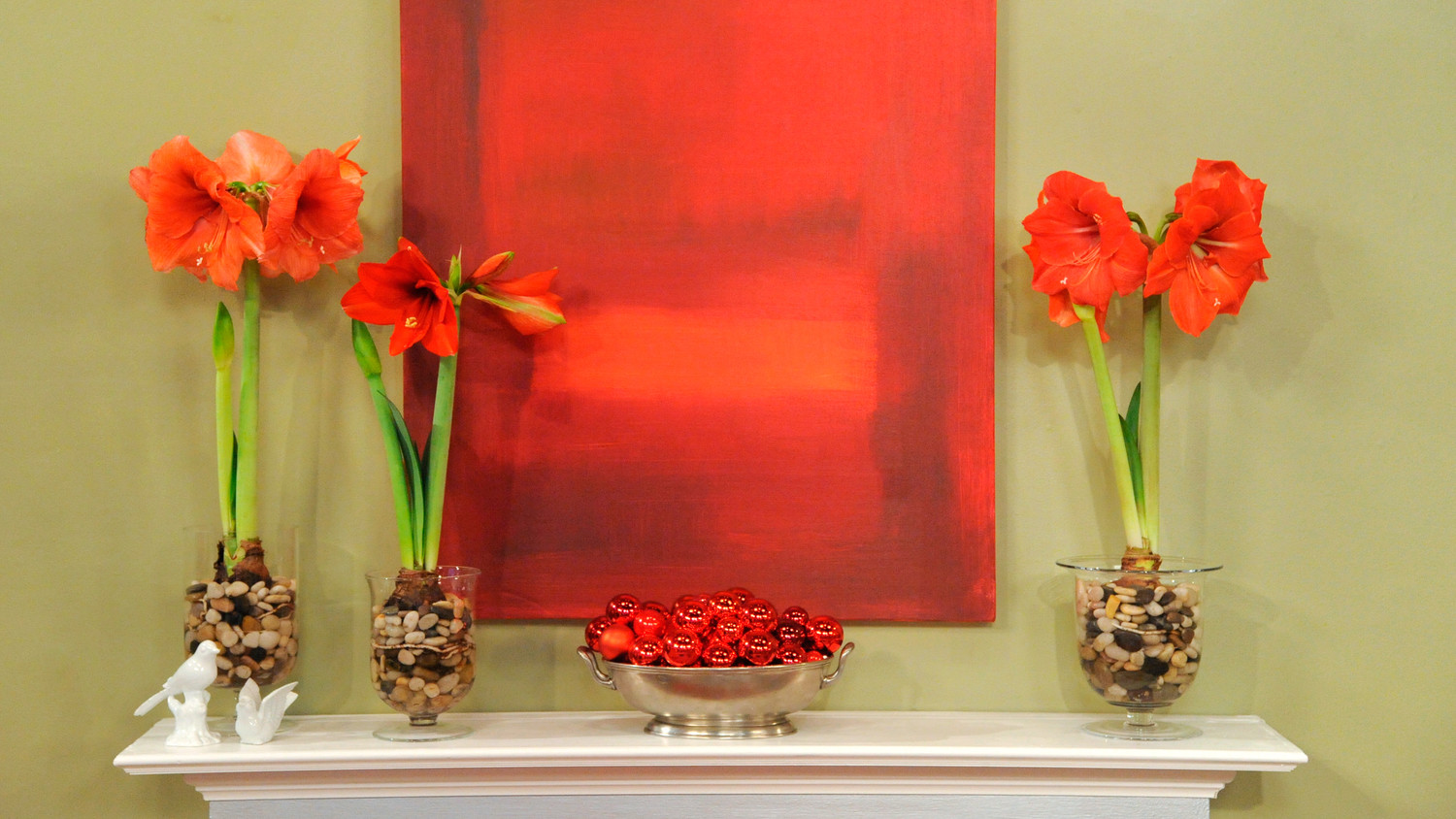 3 Ways To Plant Amaryllis Martha Stewart