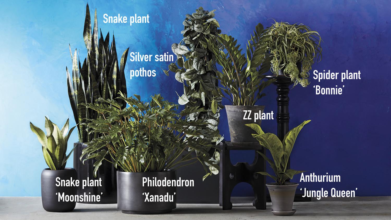 Easy Keep Indoor Plants