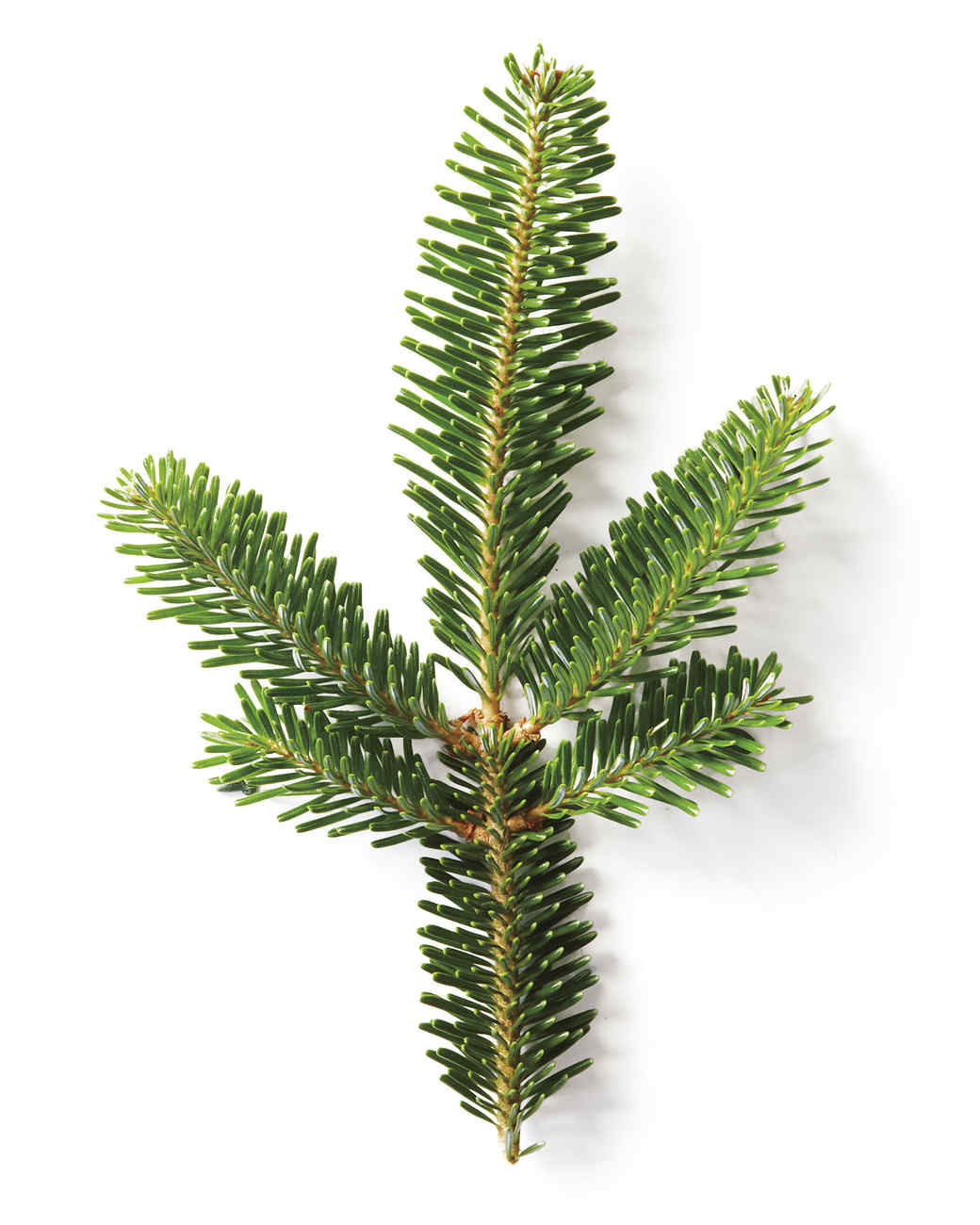 Stewart Christmas Magazine Tree Martha