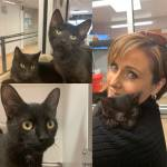 Shelter Pet Project Jan. 3 – Momma, Candace, Fur-Gie and Aleda