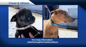 Global Peterborough's Shelter Pet Project for Friday January 5, 2021 (02:14)