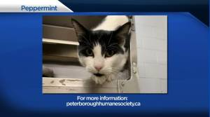 Global Peterborough's Shelter Pet Project for January 15, 2021 (02:07)