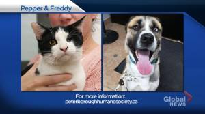 Global Peterborough's Shelter Pet Project for Nov. 13, 2020 (02:01)