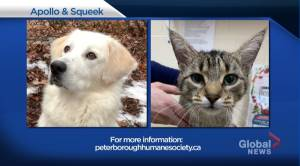 Global Peterborough's Shelter Pet Project for Nov. 27, 2020 (02:29)