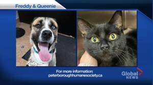 Global Peterborough's Shelter Pet Project for December 11, 2020 (02:23)