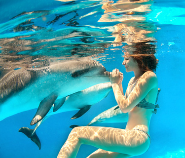 Chatting With A Dolphin One Hour Translation