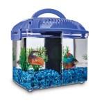 Imagitarium Betta Fish Dual Habitat Tank In Blue 0 8 Gal Petco