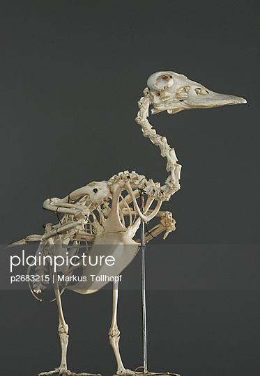 plainpicture plainpicture p2683215 skelett ente
