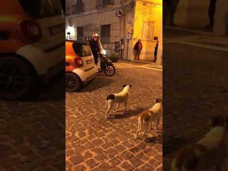 Quand un scooter croise le chemin… de deux chiens !