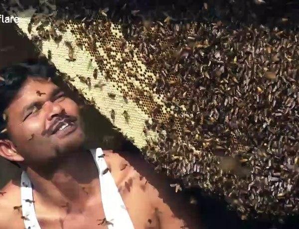Un apiculteur se filme en train d'avaler des centaines d'abeilles