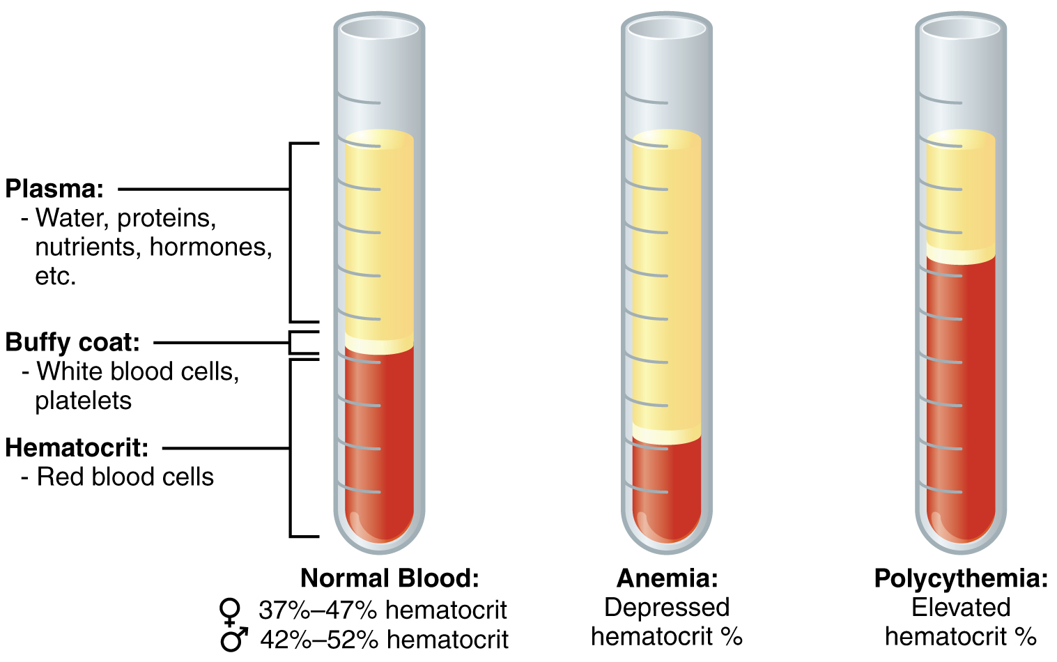 Blood Tests Amp Labysis How It Works And What You Need