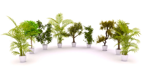 Indoor air pollution: How to protect yourself and your ...