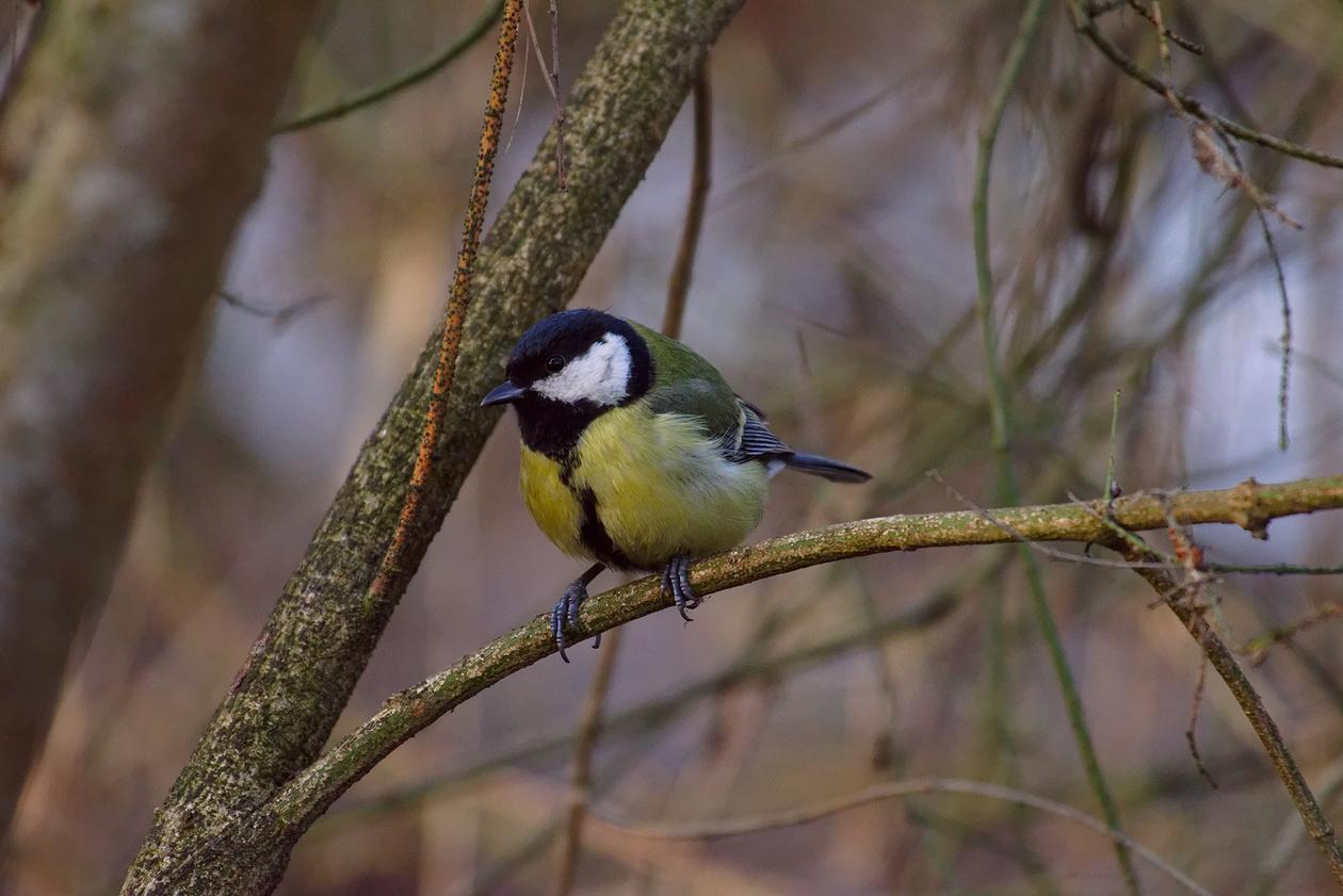 как фотографировать птицу