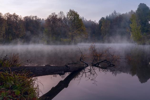 Nikon D810 / Nikon AF-S 18-35mm f/3.5-4.5G ED Nikkor Осенний туман в Московской области