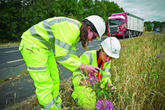Highways England staff investigate plants along the roadside