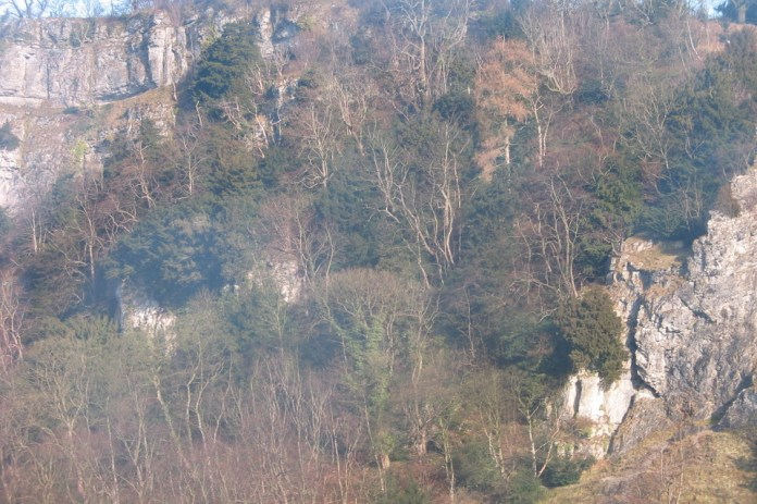 Woodland growing on rock face in Lathkill Dale in the Peak District