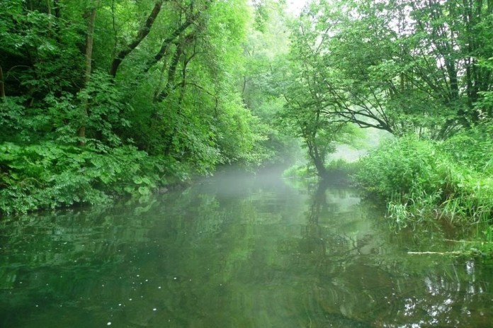 Green tree foliage overhanging a misty river